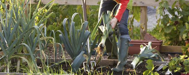 jardin-communautaire-bottes